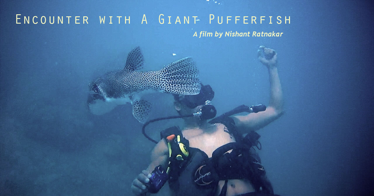 Encounter With A Giant Pufferfish